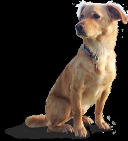 schnauzenglueck-webdesign-webseite-beschriftung-textildruck-werbeartikel-fahrzeugbeschriftung-aspach-gonzo-der-hund